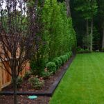 Awesome Fence With Evergreen Plants Landscaping Ideas 43