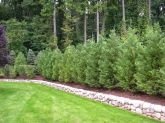 Awesome Fence With Evergreen Plants Landscaping Ideas 51