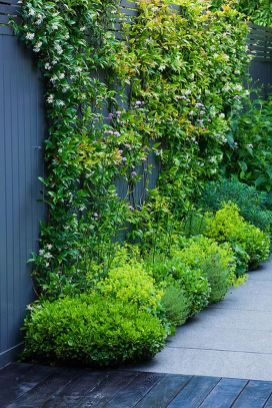 Awesome Fence With Evergreen Plants Landscaping Ideas 58