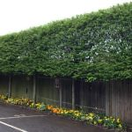 Awesome Fence With Evergreen Plants Landscaping Ideas 63