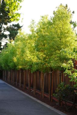 Awesome Fence With Evergreen Plants Landscaping Ideas 78