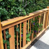 Awesome Fence With Evergreen Plants Landscaping Ideas 93