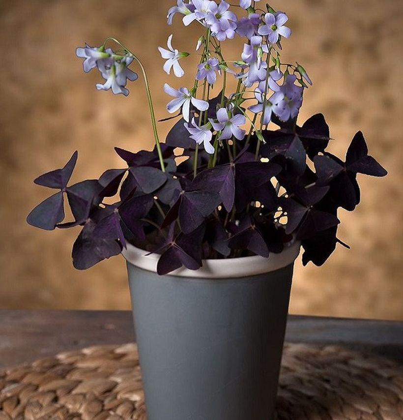 Beautiful Home Plants for Your House 1