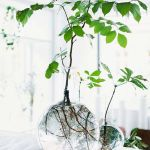 Beautiful Home Plants for Your House 15