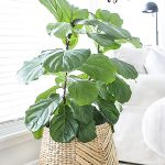 Beautiful Home Plants for Your House 20