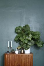 Beautiful Home Plants for Your House 30
