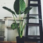 Beautiful Home Plants for Your House 5