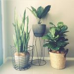 Beautiful Home Plants for Your House 6