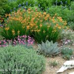 Texas Style Front Yard Landscaping Ideas 25