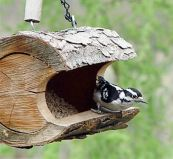 Creative DIY Bird Feeder Ideas 41