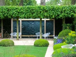 Evergreen Pleached Trees for Outdoor Landscaping