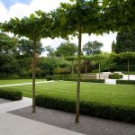 Fascinating Evergreen Pleached Trees for Outdoor Landscaping 23