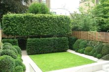 Fascinating Evergreen Pleached Trees for Outdoor Landscaping 24