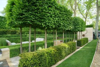 Fascinating Evergreen Pleached Trees for Outdoor Landscaping 42