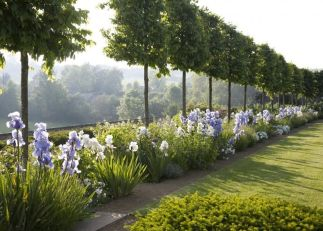 Fascinating Evergreen Pleached Trees for Outdoor Landscaping 49