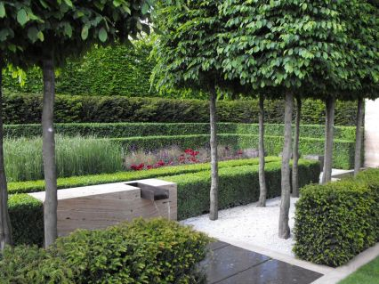 Fascinating Evergreen Pleached Trees for Outdoor Landscaping 50