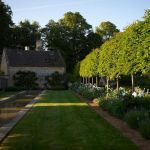 Fascinating Evergreen Pleached Trees for Outdoor Landscaping 59