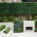Fascinating Evergreen Pleached Trees for Outdoor Landscaping 63