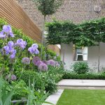 Fascinating Evergreen Pleached Trees for Outdoor Landscaping 64
