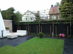 Fascinating Evergreen Pleached Trees for Outdoor Landscaping 71