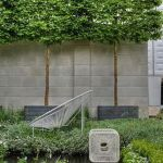Fascinating Evergreen Pleached Trees for Outdoor Landscaping 72