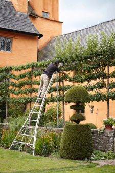 Fascinating Evergreen Pleached Trees for Outdoor Landscaping 75