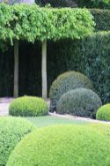 Fascinating Evergreen Pleached Trees for Outdoor Landscaping 76