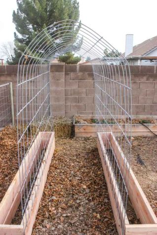 20 Awesome Tips and Ideas to Grow Grape in Your Home Backyard 1