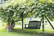 20 Awesome Tips and Ideas to Grow Grape in Your Home Backyard 19