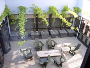20 Awesome Tips and Ideas to Grow Grape in Your Home Backyard 3
