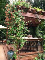20 Awesome Tips and Ideas to Grow Grape in Your Home Backyard 8