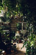 Amazing Indoor Jungle Decorations Tips and Ideas 14