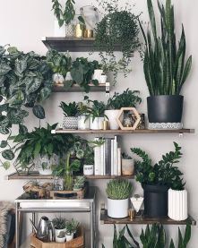 Amazing Indoor Jungle Decorations Tips and Ideas 36