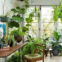 Amazing Indoor Jungle Decorations Tips and Ideas 44