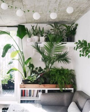Amazing Indoor Jungle Decorations Tips and Ideas 54