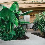 Amazing Indoor Jungle Decorations Tips and Ideas 62