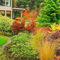 Colorful Landscaping with Low Maintenace Flower Bushes 12