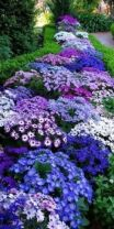 Colorful Landscaping with Low Maintenace Flower Bushes 14
