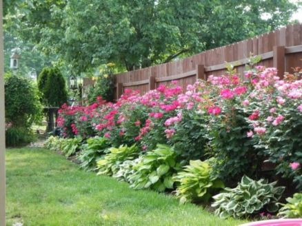 Colorful Landscaping with Low Maintenace Flower Bushes 2