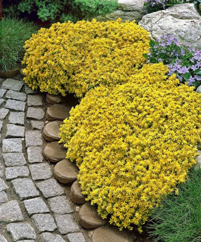 Colorful Landscaping with Low Maintenace Flower Bushes 39