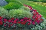Colorful Landscaping with Low Maintenace Flower Bushes 4