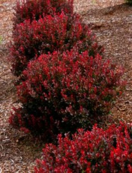 Colorful Landscaping with Low Maintenace Flower Bushes 40