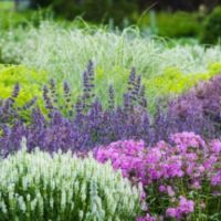 Colorful Landscaping with Low Maintenace Flower Bushes 41