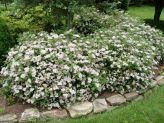 Colorful Landscaping with Low Maintenace Flower Bushes 49
