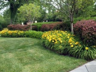 Colorful Landscaping with Low Maintenace Flower Bushes 55