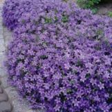 Colorful Landscaping with Low Maintenace Flower Bushes 60
