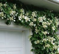 Marvelous Indoor Vines and Climbing Plants Decorations 11