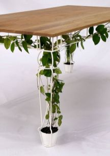 Marvelous Indoor Vines and Climbing Plants Decorations 16