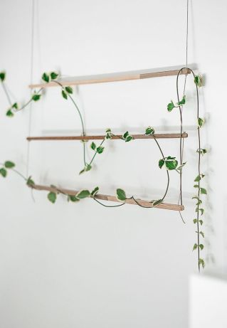 Marvelous Indoor Vines and Climbing Plants Decorations 27