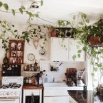 Marvelous Indoor Vines and Climbing Plants Decorations 40